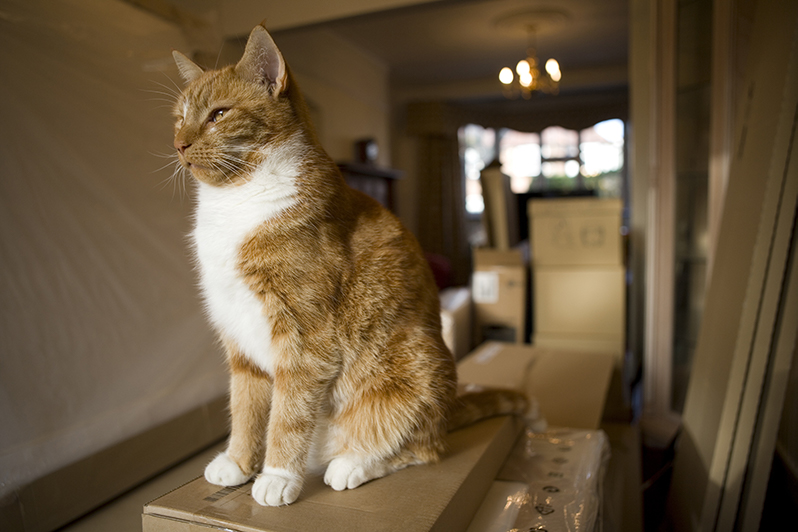 Relocation Tips for Your Pets