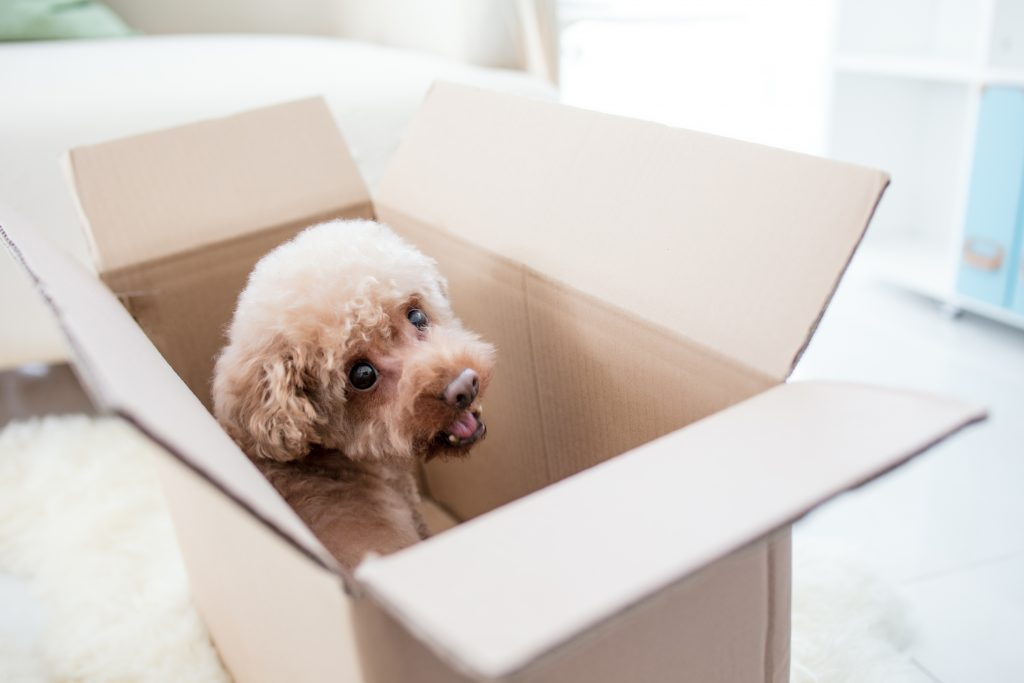 3 Rules for Moving with Pets