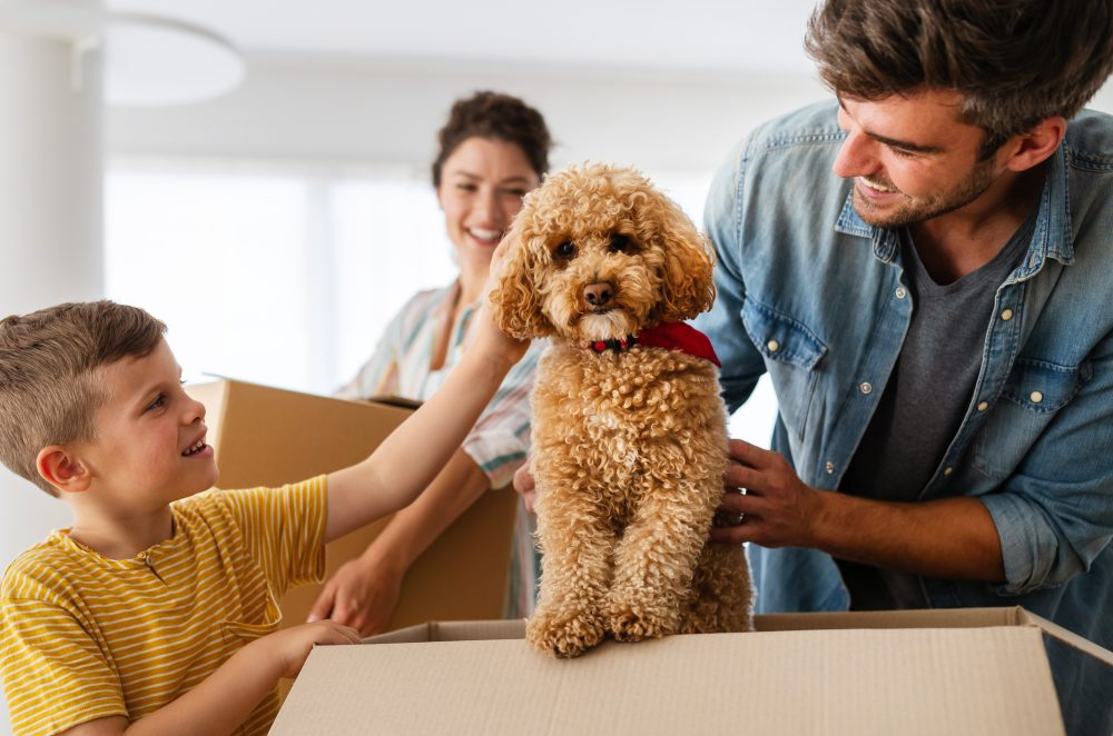 What Do To With Your Pets On Moving Day